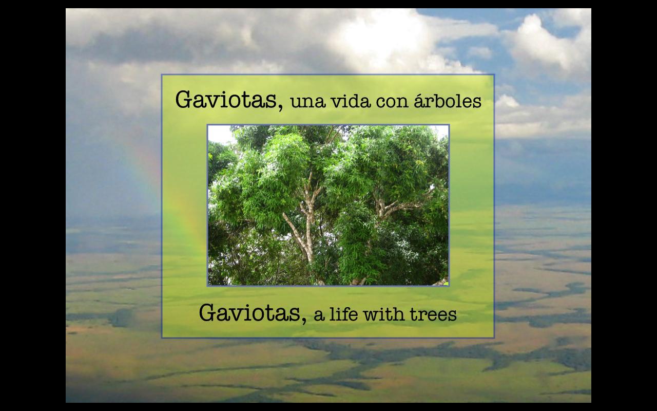 [Screencast: Gaviotas, una vida con arboles, parte 1: Viajando a Gaviotas]